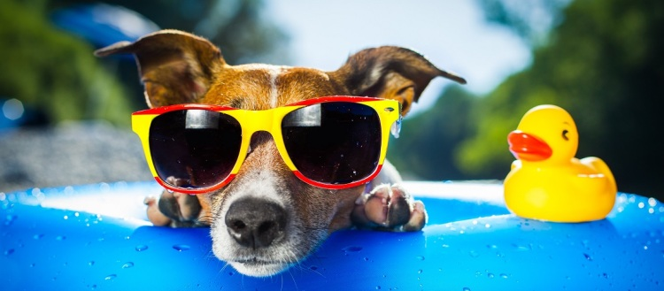 dog sunglasses cropped