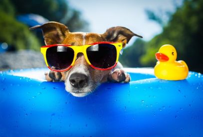 Dog-Sunglasses-Summer1