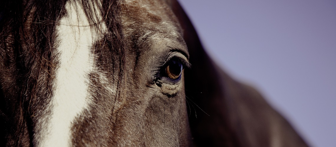 horse face resize