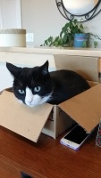 The box is for the supplies, not the pet. Try telling that to Gary Cat.